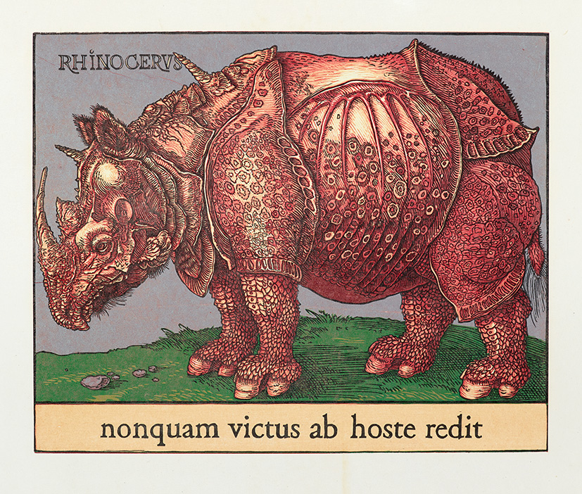 Bois grave de Jim Monson : Red rhino